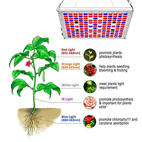 Pflanzenlampe 75W TOPLANET, Aktualisieren Reflektor Led Grow Light Panel mit IR Rot Blau Licht für Gewächshaus Hydroponik Grow Box Veg Wachstum - 2
