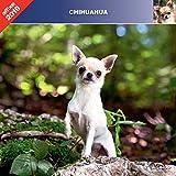 Chihuahua 2019 – Kalender Affixe