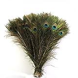 Plumas de cola de pavo real auténticas, 25,4 a 30,4 cm, 50 unidades