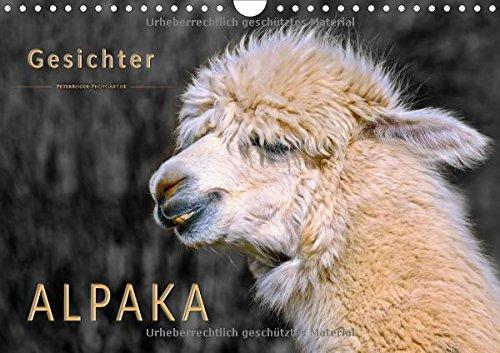 Alpaka Gesichter (Wandkalender 2018 DIN A4 quer): Eindrucksvolle Bilder der niedlichen Nager. (Monatskalender, 14 Seiten ) (CALVENDO Tiere) [Kalender] [Jul 10, 2017] Roder, Peter