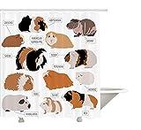 Yeuss Tenda Doccia Guinea Pig, Classificazione Design infografico per Tipi di Razze roditore, Decorazione Tessuto Bagno in Tessuto con Ganci, Ambra Color Sabbia e Zenzero