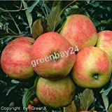 Elstar Apfel Apfelbaum Obstbaum 100/150 cm Busch Niedrigstamm sehr beliebt fruchtig