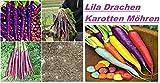 25x Lila Drachen Karotten Samen Hingucker Pflanze Seltene Gemüse essbar Garten Neuheit Saatgut gesund Neuheit #97