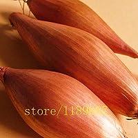 Go Garden Mini cebolla semillas de cebolla chalota cebolla Semillas orgánicos de la herencia vegetal de la fruta Inicio