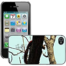 Grand Phone Cases Carcasa Funda Prima Delgada SLIM Casa Case Bandera Cover Shell para // M00141221 Malabar scoiattolo gigante Ratufa // Apple iPhone 4 4S 4G