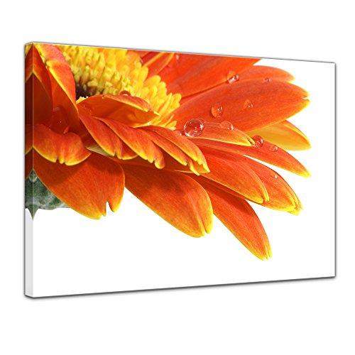 Wandbild - Gerbera mit Wassertropfen - Bild auf Leinwand - 80x60 cm 1 teilig - Leinwandbilder - Bilder als Leinwanddruck - Pflanzen & Blumen - Blüten mit Wasserperlen -