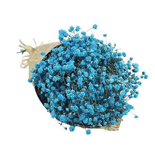 Coloré(TM) Souffle de fleurs séchées Natural Gypsophila Baby Home Fleur séchée Sky Star Star. Décor Floral le Bouquet de Fleurs Fête de Mariage (Chaud rose) (Bleu C)