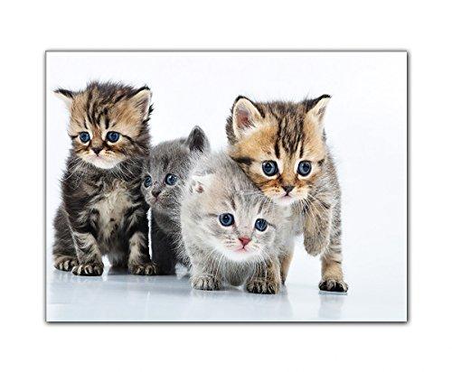 DEINEBILDER24 - Wandbild XXL vier neugierige Katzenbabys, verträumt 60 x 80 cm auf Leinwand und Keilrahmen. Beste Qualität, handgefertigt in Deutschland!