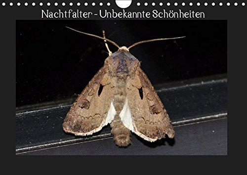 Nachtfalter - Unbekannte Schönheiten (Wandkalender 2019 DIN A4 quer): Heimische Nachtfalter aus Ostwestfalen (Monatskalender, 14 Seiten ) (CALVENDO Tiere)