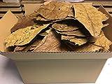 Seemandelbaumblätter 350g B-Ware unsortiert - Versand kostenlos im Paket