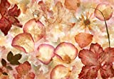 Vlies Fototapete Foto,Tapete, Non-Woven, Vlies, Grossformat 366x254 cm, Foto,Tapete, Non-Woven, Vlies, Grossformat 366x254 cm, st und Trend, Blumen, Blumen, getrocknet, Wand, Muster, Rot, Gelb, retro