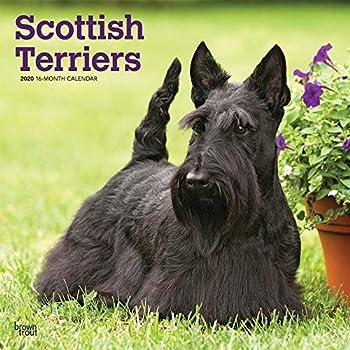 Scottish Terriers 2020 Calendar