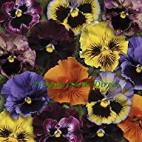 "Desconocido Generic Flower Pansy Invierno Floraciã""N Frizzle Sizzle F1 Mixed 25 Seeds"