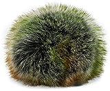 styleBREAKER Kunstfell Bommel für Mützen und Beanies, Fake Fur, Winter Fellbommel 04024161, Farbe:Orange-Grün