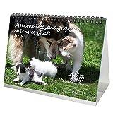 Animaux magiques chiens et chat · Premium Calendrier de bureau 2019 · 21 cm x 16,3 cm · Amitié avec les animaux · Amitié · Chiens · Chat · Ferme · Nature · Animaux · Edition âme magiques ·