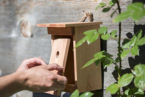 windhager-nistkasten-birdy-vogelhaus-brutkasten-nisthilfe-vogelnistkasten-aus-massivholz-inklusive-aufhaengevorrichtung-17-x-17-x-245-cm-06925-3