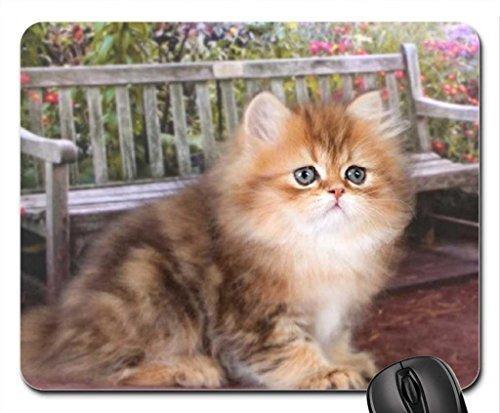 Cute Kitty im Garten Mauspad, Mousepad (Katzen Mauspad) -