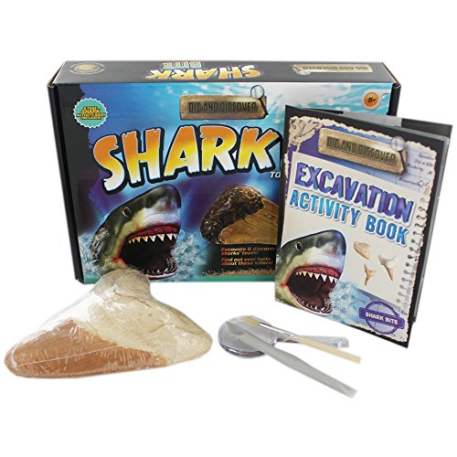 dig-and-discover-shark-bite