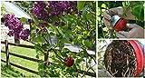 Cutting Globe, globo propagatore per piante, per far crescere le radici su una pianta, in sole 8 settimane. Propaga alberi, arbusti, rose, rampicanti e molto altro. Aggiungendo l'ormone per le radici, le radici crescono sulla pianta