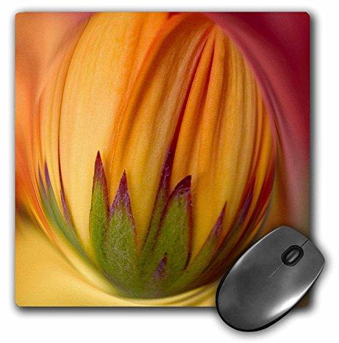 Danita Delimont - Flowers - Indiana, Carmel. Gerbera daisy flower - US15 BJA0011 - Jaynes Gallery - MousePad (mp_90259_1) (Daisy Indiana)