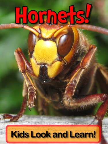 hornets-learn-about-hornets-and-enjoy-colorful-pictures-look-and-learn-50-photos-of-hornets