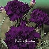 'Rey de negro' 50pcs clavel Semillas Semillas de flores planta resistente Bonsai Inicio Planta en maceta de jardín