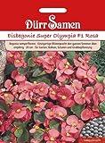 Dürr-Samen Eisbegonie Super Olympia F1 Rosa