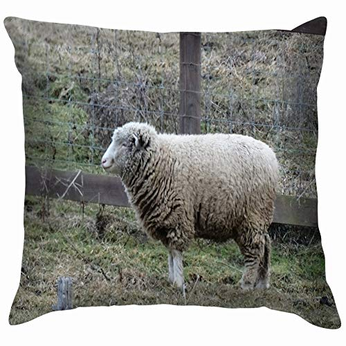 Integrity merchant Home Fashion Pillowcase one Sheep Standing Meadow Animals Wildlife Agriculture Animals Wildlife Parks Outdoor Agriculture Parks Outdoor 18x18 IN