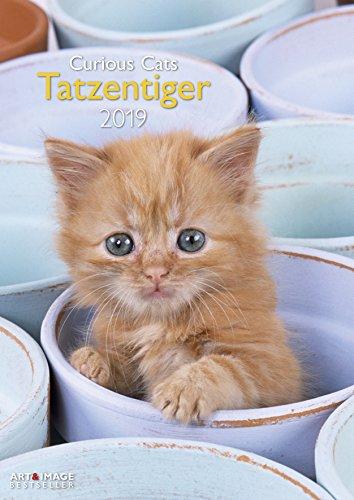 Tatzentiger 2019 Wandkalender: Curious Cats