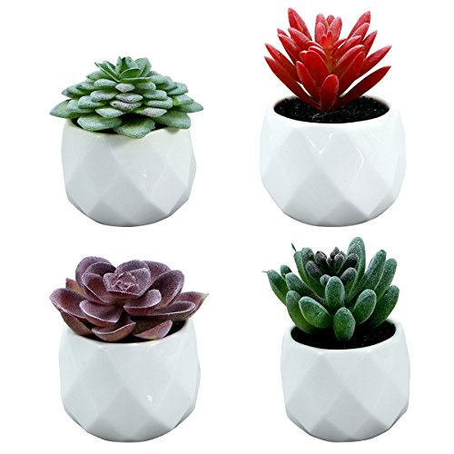 winomo 4PCS im Topf künstliche Kaktus Künstliche succulentes Künstliche Pflanzen-Simulation Dekorative mit Töpfen, einschließlich Beflockung Alocasia/Echeveria/Medinilla