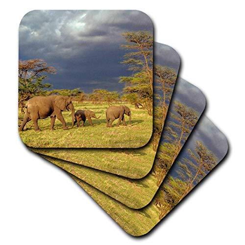 3dRose Danita Delimont-Elefanten-Afrikanischer Elefant Herde, Serengeti National Park, tanzania-af45aje0223-Adam Jones-Untersetzer, Gummi, set-of-4-Soft