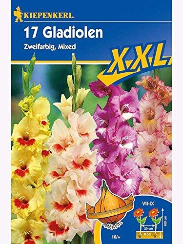 Blumenzwiebeln XXL 17 Gladiolen, Zweifarbige Mischung