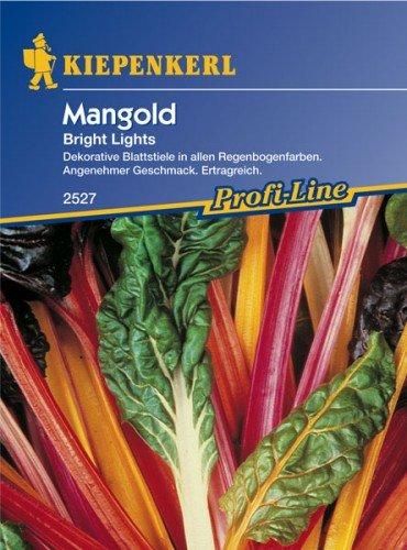 Bunter Mangold \'Bright Lights\'