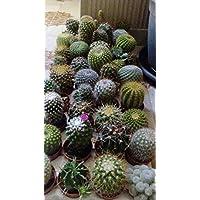 Amazon.it: Piante da esterno: Giardino e giardinaggio: Fiori, Alberi ...