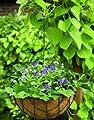 Blumenampel Hängekorb Hängeampel Pflanzkorb mit Kokosmoos Einlage von Lifetime Garden auf Du und dein Garten