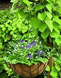 Blumenampel Hängekorb Hängeampel Pflanzkorb mit Kokosmoos Einlage