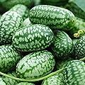 BigFamily 10 Stücke Mini Wassermelone Samen Sehr Süßen Saft Obst Hausgarten Hinterhof Edel von BigFamily auf Du und dein Garten