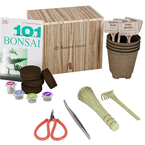 Premium Bonsai Starter Set + Buch