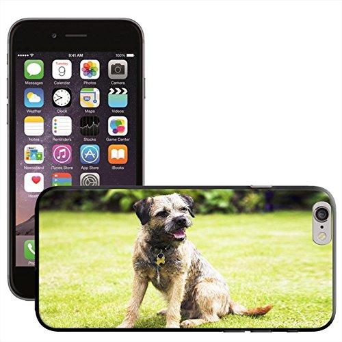 Chien–Border Terrier Coque arrière rigide pour Apple iPhone modèles, plastique, Border Terrier Dog Sitting, iPhone 5C Border Terrier Dog 2