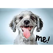 Rescue Me: Dog Adoption Portraits and Stories, from New York City