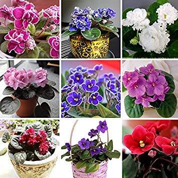 Variétés Plantes vivaces