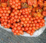 Fash Lady 120 STÜCKE Rote Johannisbeere Obstpflanze Pan-American Stachelbeere Samen Laterne Obst Samen Physalis Samen Landschaft Pflanze Für Hausgarten 1