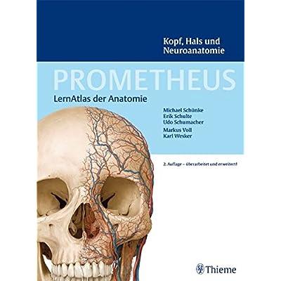 PDF] PROMETHEUS LernAtlas der Anatomie: Kopf - Hals und ...