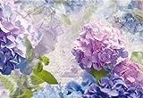 Komar Fototapete, 8-705, Otaksa, 368x254cm, rosa, blau, lila Hortensien