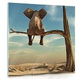 FORWALL Glasbild Glasfoto Echtglas Wandbild Elefant auf dem Baum G4 (50cm. x 50cm.) AMFGT11898G4 Elefant Baum Wüste Sand Natur Himmel