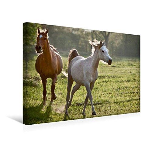 Premium Textil-Leinwand 45 cm x 30 cm quer, Ein Motiv aus dem Kalender Pferdekalender | Wandbild, Bild auf Keilrahmen, Fertigbild auf echter Leinwand, Leinwanddruck (CALVENDO Tiere)
