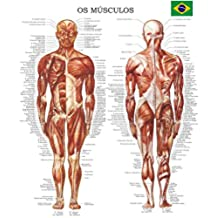 Poster os músculos - (Em Portuguese) Quick Reference Chart (Portuguese Edition)