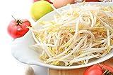 Germes de haricots mungo - 840 graines