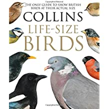 Collins Life-Size Birds: The Only Guide to Show British Birds at their Actual Size
