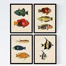 Nacnic Set de 4 láminas de Peces Coloridos Efecto Vintage. Baleares. Composicion de 10